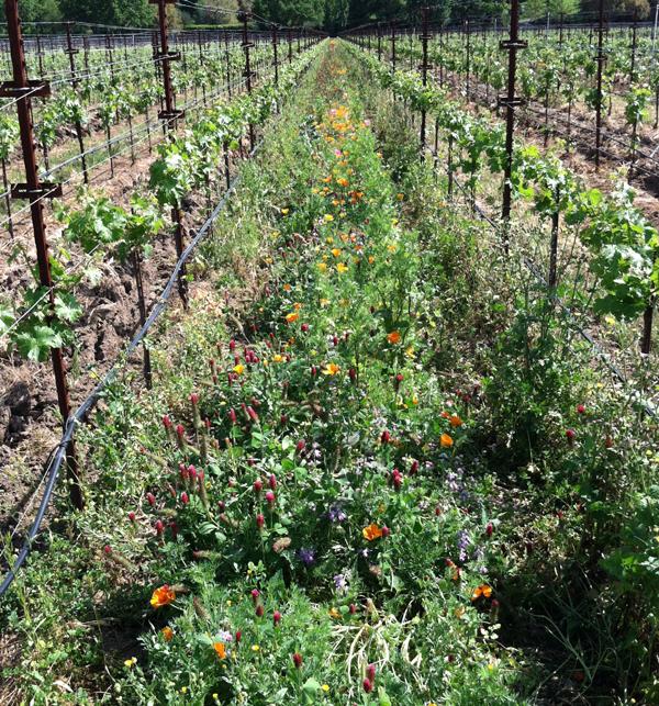 Stelling vineyard