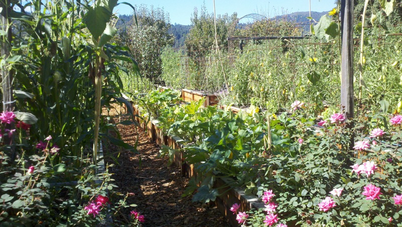 Far Niente vegetable garden