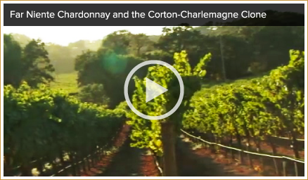 Napa Valley Chardonnay Video