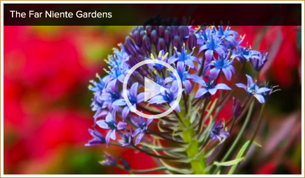 Napa Valley garden video
