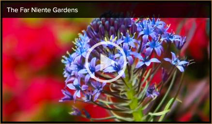 Napa Valley garden video