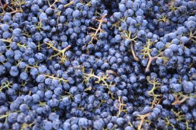 Wine Club Harvest Party