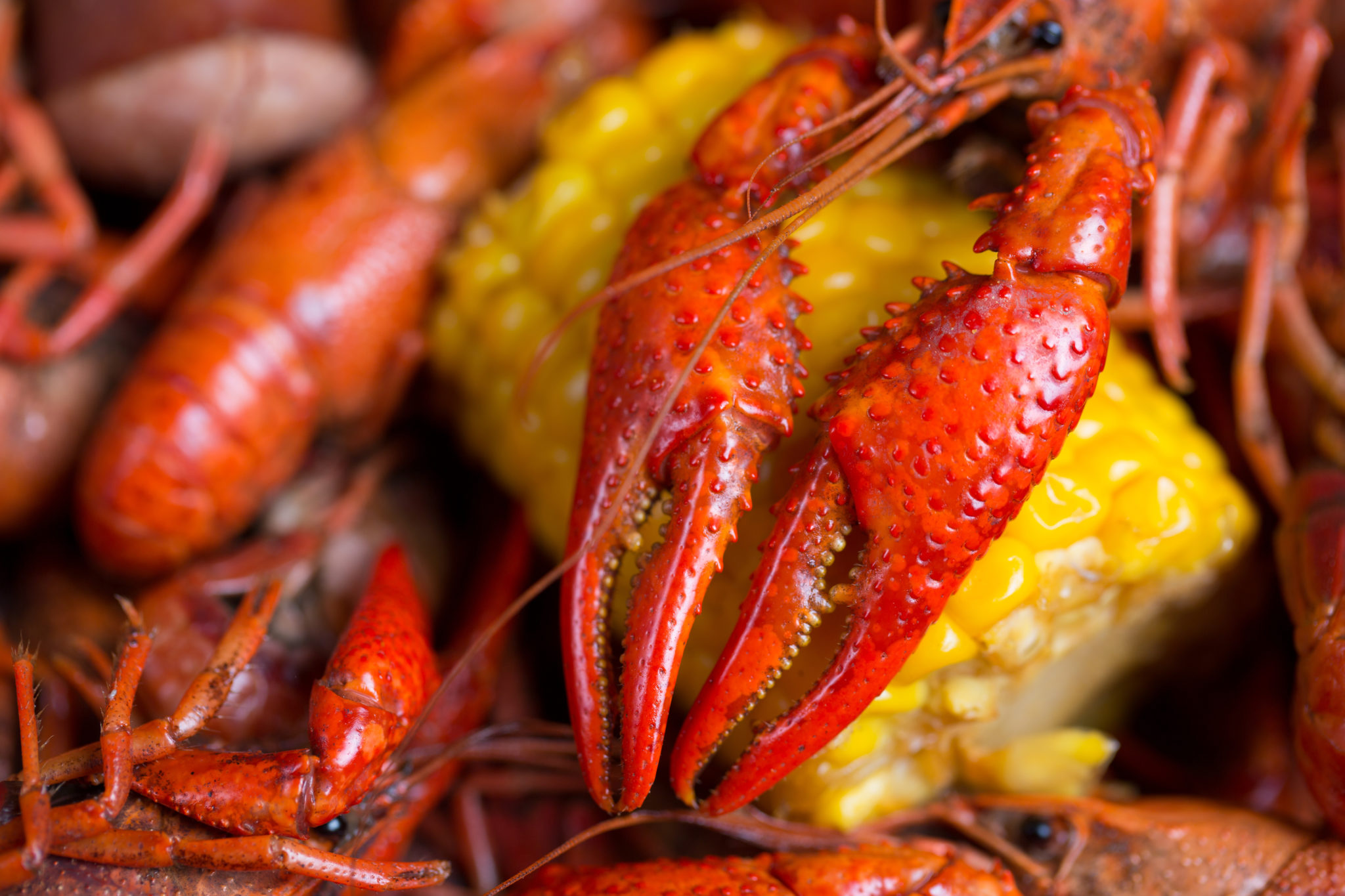 La Dolce Vita: Lobster and Chardonnay in the Vineyard – SOLD OUT